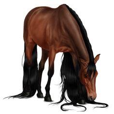 Filustre, Pferd Araber Dunkelfuchs #11014351 - Howrse