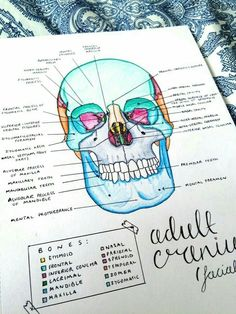 Medical Anatomy Study Guides Tips 19 Ideas Nursing School Notes, Medical School, Medical Students, Nursing Students, Science Notes, Science Ideas, Science Projects, Life Science, Medical Anatomy