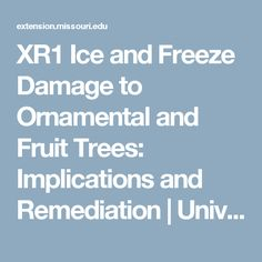 XR1 Ice and Freeze Damage to Ornamental and Fruit Trees: Implications and Remediation   University of Missouri Extension