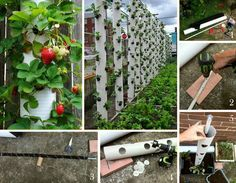 Low-Cost DIY Gardening Projects Made With PVC Pipes (linked on page): strawberry tower
