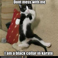 26ab7116b funny pictures Dont mess with me I am a black collar in karate Ninja Cats,