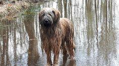 Briard Cute Animals, Dog, Pets, Friends, World, Pretty Animals, Diy Dog, Amigos, Cutest Animals