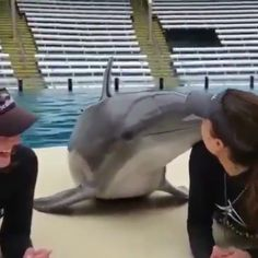 Kiss time with cute dolphin - Lustiges - animals Cute Funny Animals, Cute Baby Animals, Animals And Pets, Cute Dogs, Cute Animal Videos, Cute Animal Pictures, Animal Memes, Pet Birds, Animals Beautiful