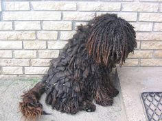 #Dreadlocks dog  Like,Repin,Share, Thanks!