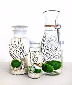 Choose your set of aquatic terrariums (aquariums)! Fuzzy marimo moss balls float amongst an intricate backdrop of webbed black sea fans and real sea