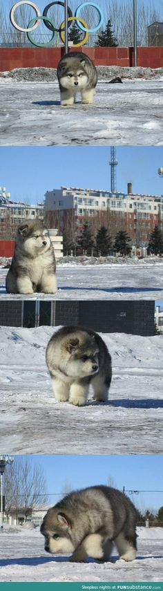 So This Canine Exists And He's Ridiculously Fluffy