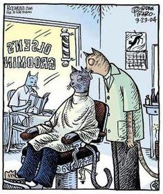 :) A cat haircut 猫式特色理发
