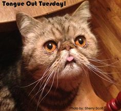 Happy #TongueOutTuesday!! Thank you to Sherry Scott for sending us this adorable picture for #TongueOutTuesday!