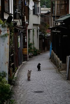 Cat and hilly small town,Onomichi,Hisoshima,Japan One Night In Bangkok, Japan Street, Japanese Streets, Japanese Architecture, Tokyo Japan, Japanese Culture, Beautiful Cats, Japan Travel, Land Scape