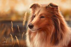 dog_collie