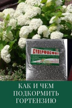 Small Farm, Garden Plants, Cottage, Herbs, Cottages, Herb, Cabin, Cabins, Medicinal Plants