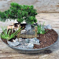 Create a Fairy Garden With Natural Materials - Teelie& Fairy Garden Miniature Plants, Miniature Fairy Gardens, Garden Terrarium, Succulents Garden, Create A Fairy, Mini Plants, Love Garden, Gardening Supplies, Bonsai