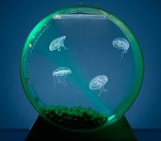 Aquarium pour méduses #aquarium