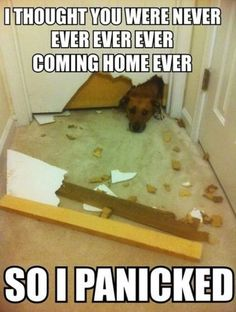 i can totally see my puppy doing this...good thing he has a cage haha