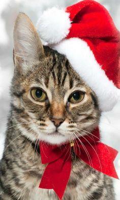 Christmas Santa Kitty. Videos for Cats www.tvbini.com