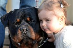 Big #Rottweiler and small girl