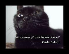 OccupyForLife: Maya, pisica mea neagra/ Maya , my black cat Humanity Restored, My Black, Maya, Great Gifts, My Love, Animals, Inspiration, Biblical Inspiration, Animales