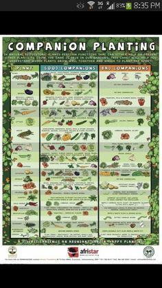 Companion Planting - Home Farm Ideas, FB Page