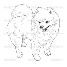 printable pomeranian coloring page - Google Search | coloring ...