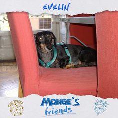 Evelin #Mongesfriends
