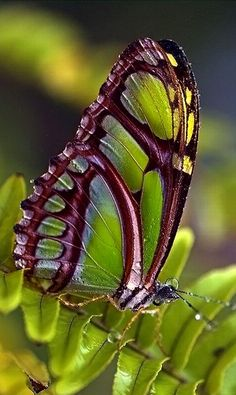 see you don't have to color inside the lines, such a beautiful butterfly Butterfly Kisses, Butterfly Flowers, Butterfly Wings, Purple Butterfly, Beautiful Bugs, Beautiful Butterflies, Beautiful Creatures, Animals Beautiful, Moth Caterpillar