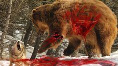 Top 10 Animals Hunt Animal Hunting In Amazon Animal Hunting And Killing ...