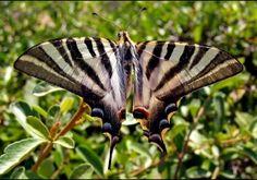 /Butterfly I