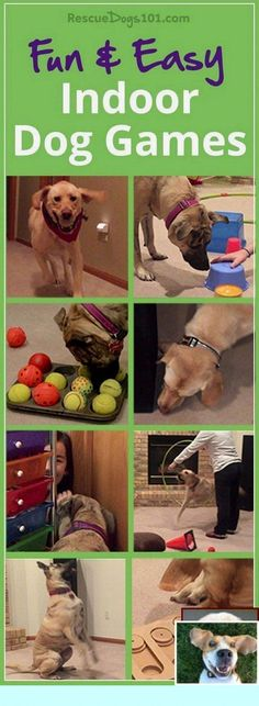 11 Fun and Easy Indoor Dog Games – Physical and mental exercise is so important for your dog's health, so when it's not possible to go outside, then turn to this list of indoor dog games. Dog Training Methods, Basic Dog Training, Dog Training Techniques, Potty Training, Training Pads, Training Classes, Toilet Training, Leash Training, Agility Training