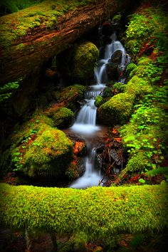 .Love the soft look of moss..........