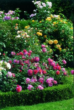Christopher Marlowe (Rose) pink, in the foreground Like the low boxwood hedge! Rose Garden Design, Cottage Garden Design, Cottage Garden Plants, Pink Garden, Garden Bed, Beautiful Roses, Beautiful Gardens, Garden Tool Set, Garden Drawing