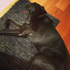 Long time no see! It's time to go to bed. . お久しぶりです。 アベさんそろそろhouseしてくださーい。 この顔っ、、! . . #dog #Doberman #mix #abel #Rescued  #rescuedog #Germany #family #love #ドッグ #犬 #わんこ #いぬ #ドーベルマン #ミックス犬 #アベル #大型犬 #犬のいる生活 #保護犬出身 #愛犬 #家族 #まっくろくろすけ #些細な抵抗