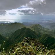 After some years of being in and out of Hawaii, I took a hike to the tallest peak on the eastern mountain range (the Ko'olau range) called Mount Konahuanui. The other peak, Mt. Ka'ala (4,026') is on the western range or Waianae range but is on federal land. Most of the coastal areas and residential areas of Hawaii are more abundant with introduced/invasive species of plant and animal. However, if you hike the mountains, you can still see Hawaii's endemics if your lucky.