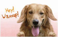 hey wassup dog