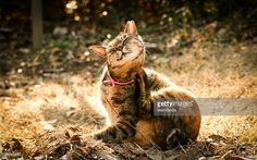 Kitten at the sunset park#GettyImages/RM#MamiGibbs
