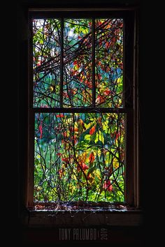 """Photo by Tony Palumbo """"No one does stained glass like Mother Nature. Glass Wall Art, Stained Glass Art, Stained Glass Windows, Modern Color Schemes, Garden Windows, Crushed Glass, Glass Marbles, Environmental Art, Botanical Art"""