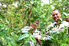 Coffee farm in Oaxaca, Mexico - #TerraMica working closely with coffee #farmer and friend #agriculture #coffee