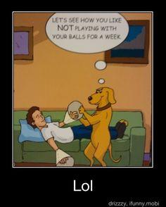 Vicious Dog :-) (Vet Tech Sweets)