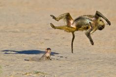Flipped out sister! Photograph by Marc MOL -- National Geographic Your Shot