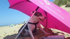 Are you feeling the heat of the property market? Keep yourself cool and use our Delisa Miller umbrella! Tina here is surely enjoying the shade Keep Your Cool, How Are You Feeling, Marketing, Feelings, Cool Stuff, Cool Things