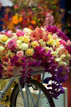 Ana Rosa bicycle of flowers and roses My Flower, Pretty Flowers, Colorful Flowers, Fresh Flowers, Morning Greeting, Beautiful Roses, Beautiful Soul, Good Morning, Happy Sunday Morning