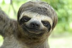 I can't help but smile.. Sloths are just adorable