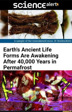 Earth's Ancient Life Forms Are Awakening After Years in - iFunny :) Jojo's Bizarre Adventure, Jojo Anime, Jojo Memes, Lol, Life Form, Gaming Memes, Jojo Bizarre, Funny Comics, Popular Memes