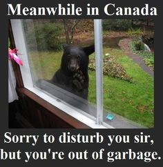 Canada humor bear out of garbage Canadian Memes, Canadian Things, I Am Canadian, Canadian Humour, Canadian People, Canada Jokes, Canada Funny, Canada Eh, Meanwhile In Canada