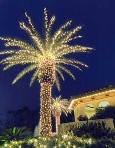 Fantastic use of lights on a palm tree for Christmas