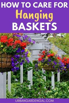 Hanging baskets full of annual flowers look beautiful hanging from porches or verandas. Here's how to keep your hanging basket flowers blooming for longer. #flowers #flowergarden
