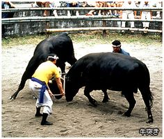 Ushi tsuki. Looking for more information aboout Shimane? Go Visit Association of Shimane sightseeing.  http://www.kankou-shimane.com/