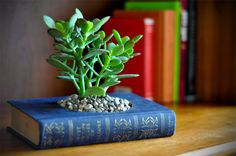 DIY recycled book planter.