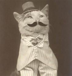 Cats in Photography: The Gentleman cat.