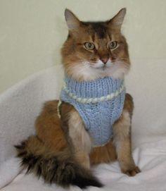 猫のセーター