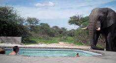 Guarda chi ho invitato in piscina oggi.... - http://www.ahboh.it/bagno-piscina-elefante/